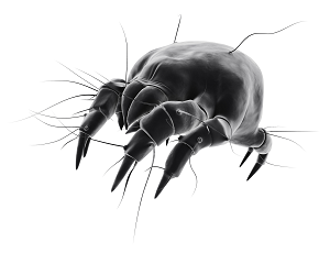 Mites   American Pest Services