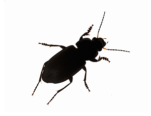 All Pests American Pest Services